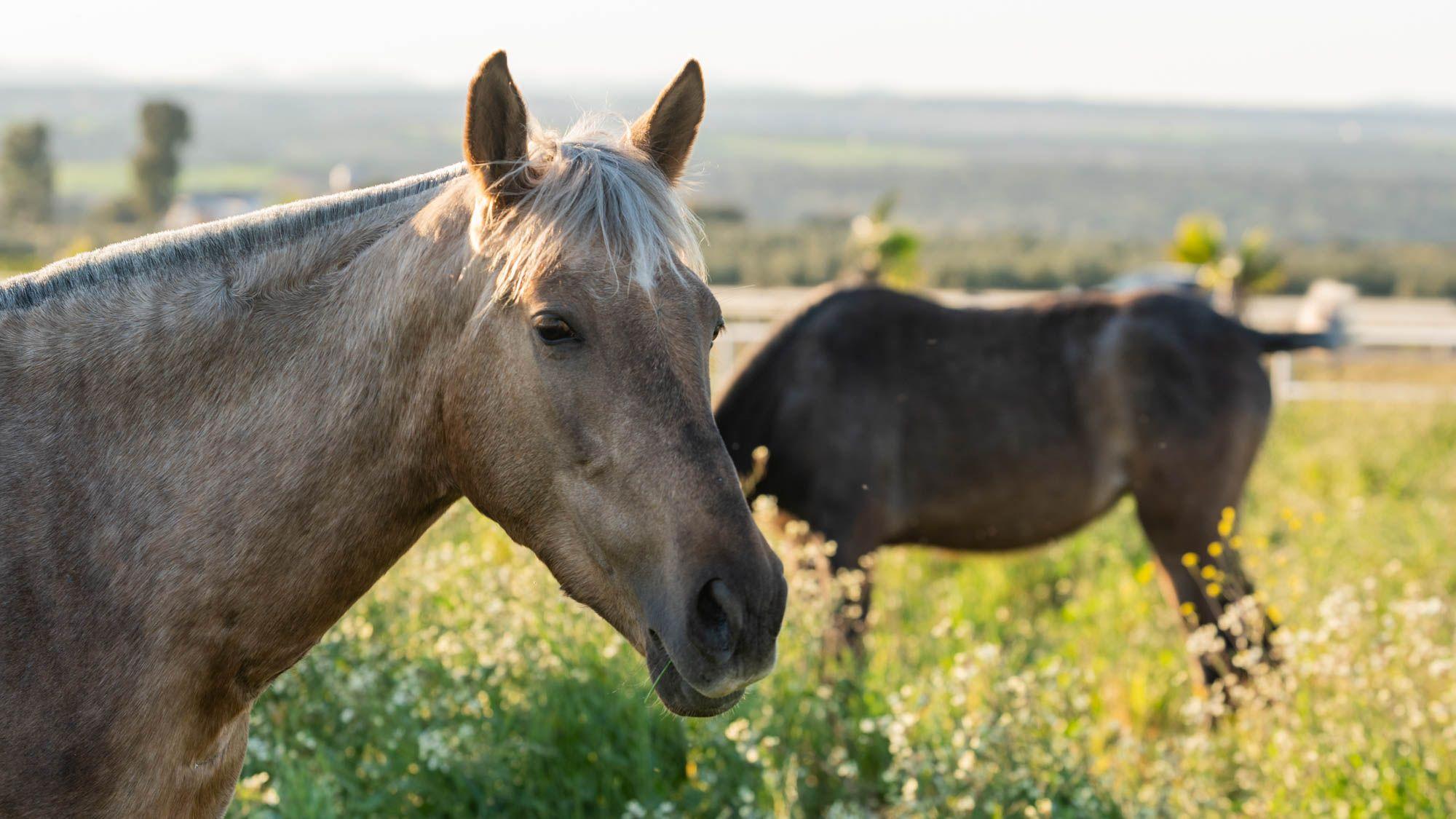 horse2-126